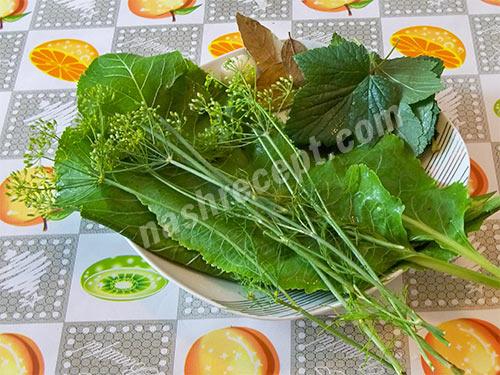 моем зелень для консервирования кабачков - moem zelen dlya konservirovaniya kabachkov