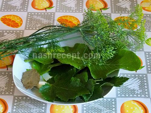 зелень для консервирования помидоров - zelen dlya konservirovaniya pomidorov