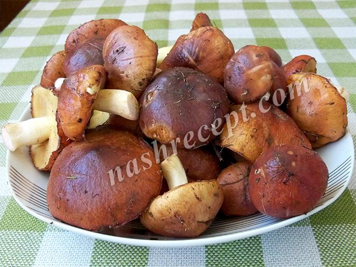 грибы маслята для маринования - griby maslyata dlya marinovaniya